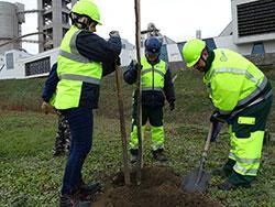 Őshonos fákat ültet a Királyegyházi Cementgyár
